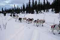 Ed Iten on Trail Leaving Rainy Pass Chkpt AK 2005 Iditarod
