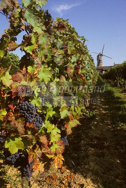 Europe/France/Pays de la Loire/Maine-et-Loire/Brissac : AOC Coteaux de l'Aubance, le vignoble et le moulin de Brissac