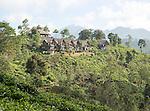 98 Acres resort luxury lodges, Ella, Badulla District, Uva Province, Sri Lanka, Asia