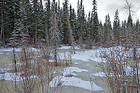 Beaver Boardwalk on Maxwell Lake near Hinton Alberta is a unique habitat teaming with life in the summer, but loses none of its beauty in the winter...