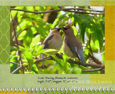 October 2011 Birds of a Feather Calendar