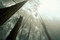 Indonesia, Borneo, W. Kalimantan, Bentuang-Karimun National Park