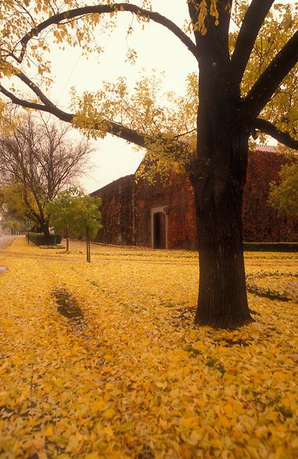 Fall at Beaulieu Vineyards