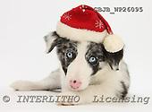 Kim, CHRISTMAS ANIMALS, photos, GBJBWP26095,#XA# stickers