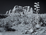 Cathedral Rock from Templeton Trail, Sedona (Infrared)