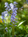 Spring in Sarah P. Duke Gardens.<br /> <br /> Photo by Bill Snead/Duke Photography #dukephotoaday, #dukefacilities