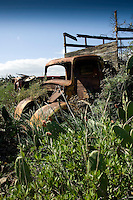 Old abandoned truck, and prickly pears,Tenerife, Canary islands, Spain,