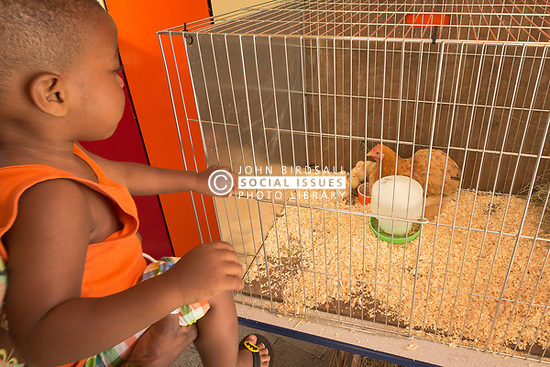Chickens at The Broadwaters Inclusive Learning Community, Tottenham, London Borough of Haringey July 2014. This is a collaboration between two local schools, The Willow Primary School & The Brook Primary Special School. UK