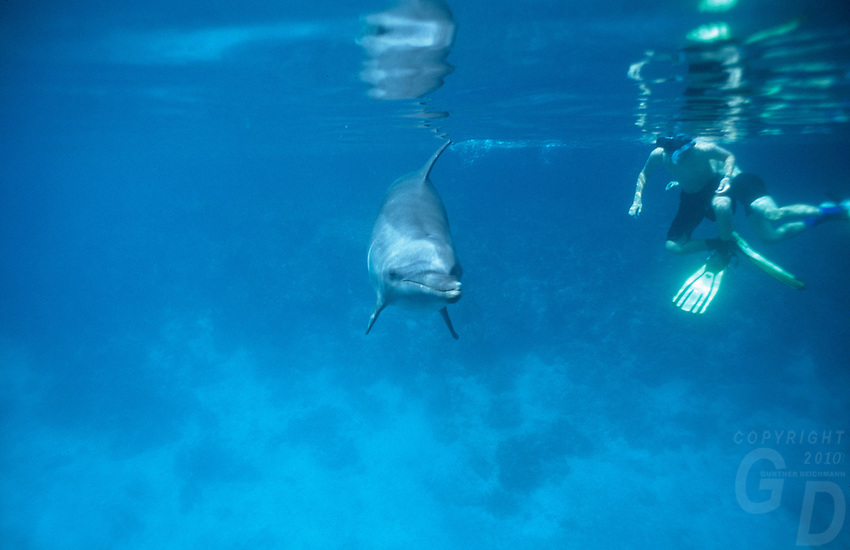Dolphin swimming with People