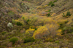 Northern coastal srub in autumn, Tennessee Valley, Mill Valley, Bay Area, California