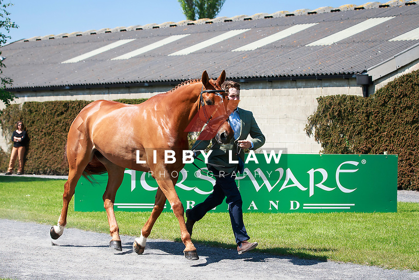 GBR-Tom McEwen (JOYRIDE) CCI3* FIRST HORSE INSPECTION: 2016 IRL-Tattersalls International Horse Trial (Wednesday 1 June) CREDIT: Libby Law COPYRIGHT: LIBBY LAW PHOTOGRAPHY