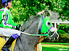 In X Hess in the paddock at Delaware Park racetrack on 5/31/14