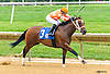 Pie Baby Pie winning at Delaware Park on 8/8/16