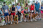 Events like Seattle Animal Shelter's Furry 5K raise hundreds of thousands of dollars to help pay for the care and adoption of stray and owner-surrendered animals, Sewerd Park, Seattle, Washington, USA.