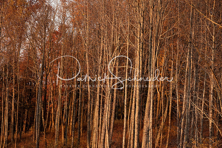 A stand of leafless trees near Lake Watauga, a Tennessee Valley Authority lake located in Northeastern Tennessee.