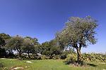 Israel, Lower Galilee, a bustan near Hurvat Usha