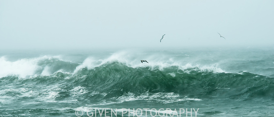 Gulls and wave