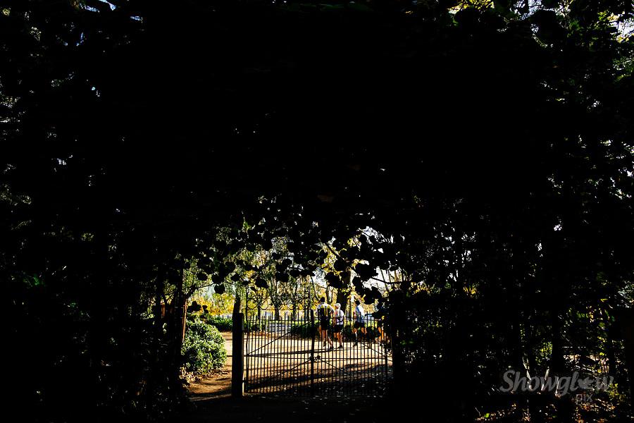 Image Ref: M312<br /> Location: Royal Botanical Gardens, Melbourne<br /> Date: 10.06.17