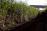 Patos de Minas_MG, Brasil...Plantacao de cana-de-acucar de cachacaria em Patos de Minas, Minas Gerais...Planting of sugar cane of cachaca factory  in Patos de Minas, Minas Gerais...Foto: LEO DRUMOND / NITRO