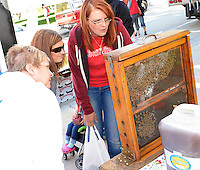 People admire the Gentle Breeze Honey bees at the Dane County Farmer's Market on Saturday, September 12, 2015, in Madison, Wisconsin