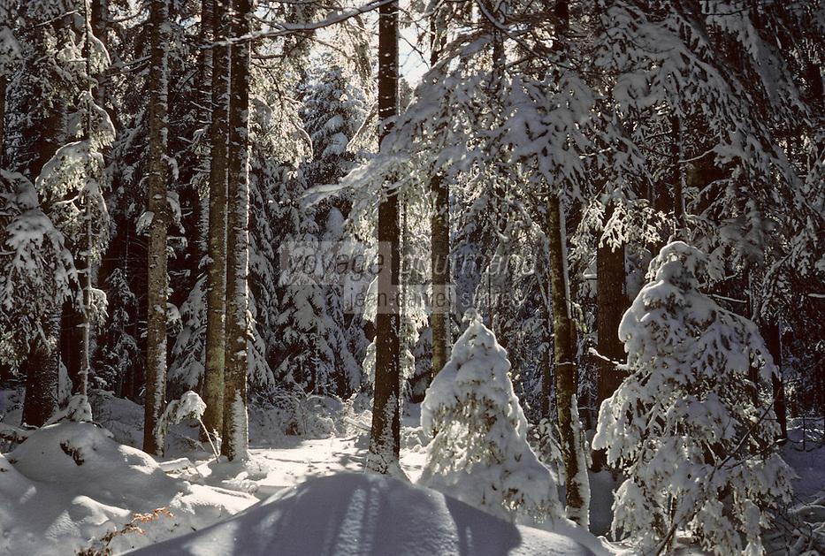 Europe/France/Franche-Comté/25/Doubs/Rochejean: Le mont Doré et la forêt - Arbres enneigés en hiver