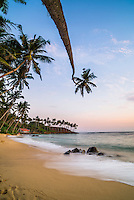 Photo of a palm tree at sunset, Mirissa Beach, South Coast of Sri Lanka, Asia. This is a photo of a palm tree at sunset on Mirissa Beach, Sri Lanka, Asia.