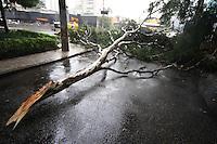 SAO PAULO, SP, 05/06/2012, QUEDA ARVORE. A  R. Chafik esquina com a Av JUscelino Kubitschek esta totalmente interditada devido a parte de uma arvore ter caido e bloqueado a via.  Luiz Guarnieri/  Brazil Photo Press