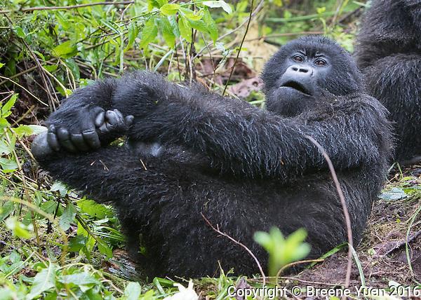Gorilla Yoga Rwanda 2015