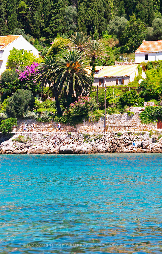Seaside beachside villas with palm trees, orange trees, trees in lilac violet bloom, deep blue sea. Walking pathway. Uvala Sumartin bay between Babin Kuk and Lapad peninsulas. Dubrovnik, new city. Dalmatian Coast, Croatia, Europe.