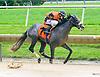 Mr. McGoey winning at Delaware Park on 7/29/17