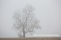 63808-03106 Bare tree in fog Marion Co. IL