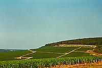 Chablis: the Fourchaume premier cru (first growth) vineyard