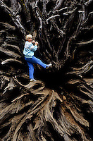 Woman climbing root of a dead sequoia tree in Yosemite National Park, California, USA