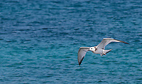 The swallow-tailed gull is the world's only nocturnal seabird.