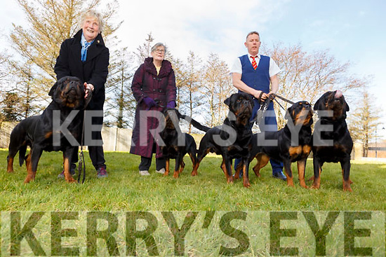 Kitty, Ina and Tim Galvin with their 5 Rothweilers been exercised as they prepare them for the upcoming Crufts Dog show final.