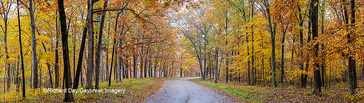 63895-15910 Road in fall color Stephen A. Forbes State Park Marion Co. IL