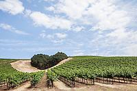 Niner Winery