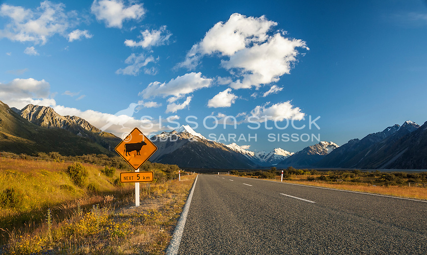 Cow warning sign on SH80 road to Aoraki Mt Cook, Canterbury New Zealand