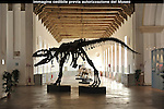 Museo Regionale di Scienze Naturali. The Turin Museum of Natural History