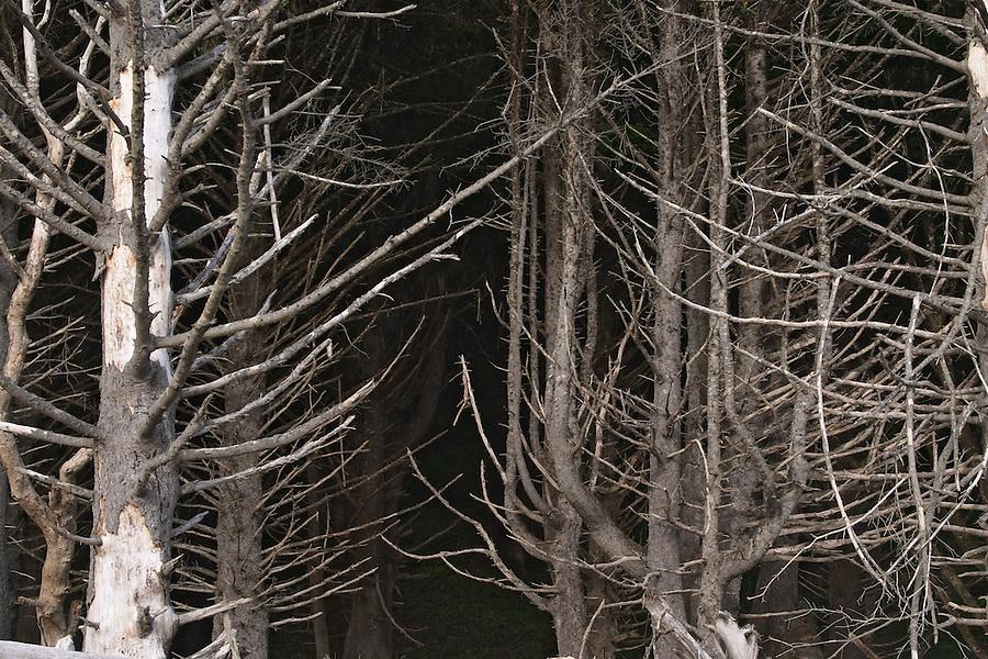 Dead trees on Mora Beach, Olympic National Park, Olympic Peninsula, Clallam County, Washington, USA