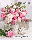 Alfredo, FLOWERS, BLUMEN, FLORES, photos+++++,BRTOLMN48301,#f#, EVERYDAY