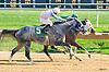 Silk n' Sequins winning at Delaware Park on 10/12/16