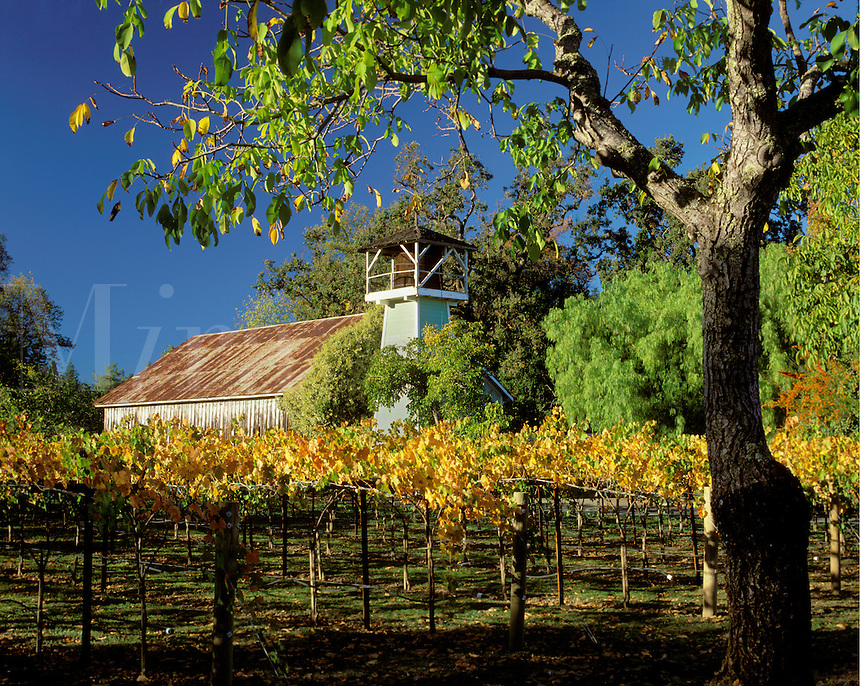 NAPA VALLEY VINEYARD with barn - ST. HELENA, CALIFORNIA
