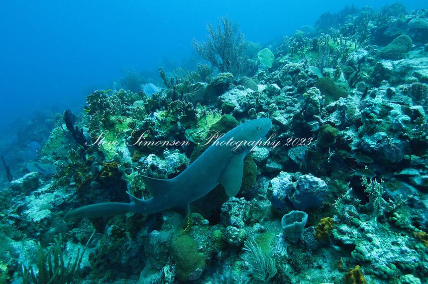Dog Island.US Virgin Islands