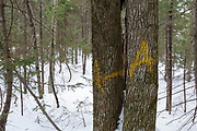 Unit 48 of the Kanc 7 Timber Harvest logging project along the Kancamagus Scenic Byway in the White Mountains of New Hampshire USA. The A painted on the trees is the marking symbol of the timber cruiser who worked the area. Its placed on a tree that was selected as a sample tree for the timber cruise of the sale.