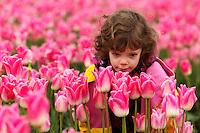 Girl in smelling pink tulips, Skagit Valley, Washington, USA