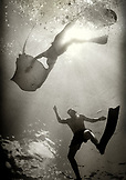 CAYMAN ISLANDS, Grand Cayman, snorkeling with sting rays at Sting Ray City in the Caribbean Sea (B&W)
