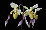 2018_01_25 Orchids