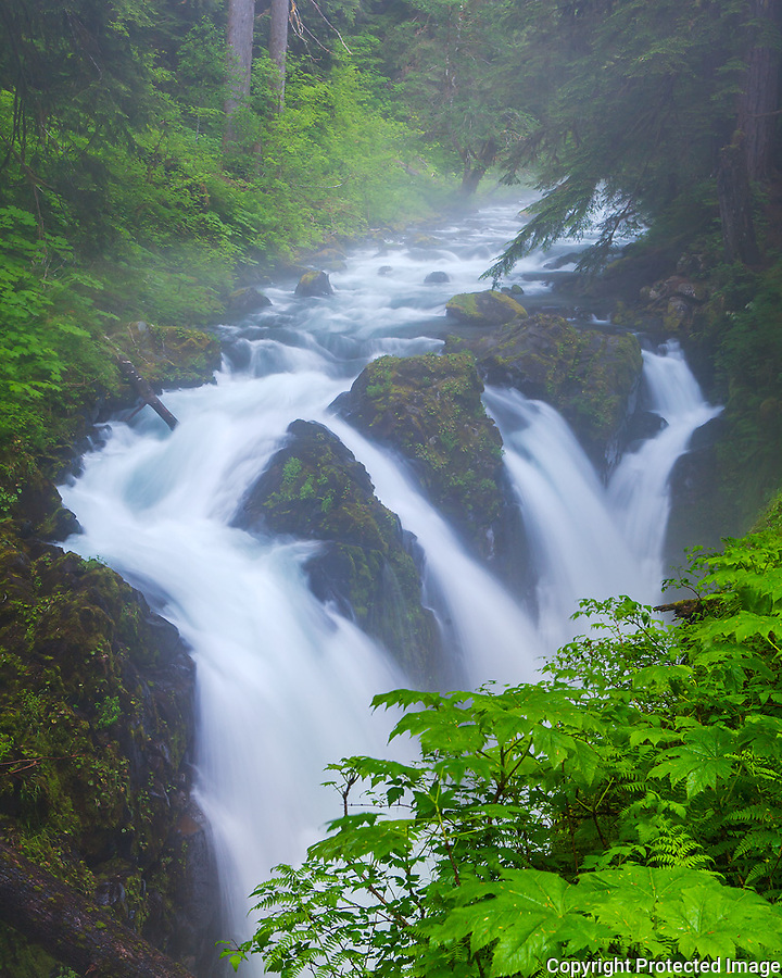 Olympic National Park, Wasington<br /> Sol Duc Falls with fog and mist of the temperate rainforest
