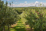 Pine View Orchard in Berwick, Maine, USA